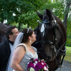 Whispery Pines Carriage Rides - Horse Drawn Carriage / Wedding Services in Kingsville, Ohio