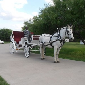 White Horse and Carriage Company - Horse Drawn Carriage / Princess Party in San Antonio, Texas
