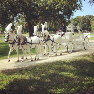 Wind Chase Farm Horse & Carriage - Horse Drawn Carriage in Palm City, Florida