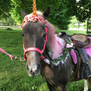Winding Brook Farm - Pony Party in Flemington, New Jersey
