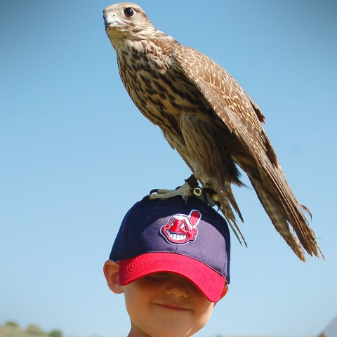 World birds of prey reno on best s in reno nevada