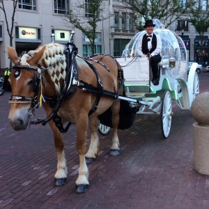 Yellow Rose Carriages, Inc. - Horse Drawn Carriage / Prom Entertainment in Indianapolis, Indiana