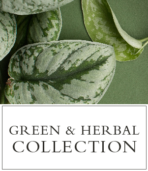 Green and Herbal Fragrances