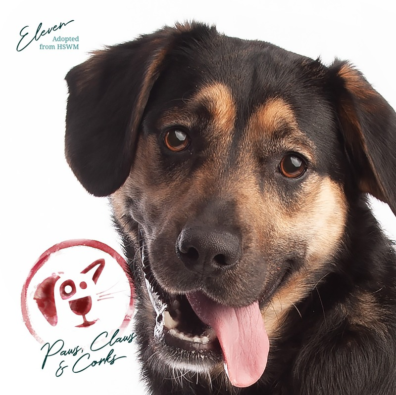 L501 - Your Pet as the Face of PCC 2021