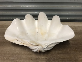 Giant Clam Shell- Authentic