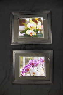 Framed Pink and Yellow Orchid Picture Set