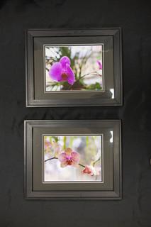 Framed Orchid Picture Set