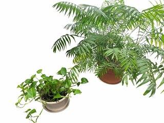 36.  Live Plants