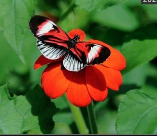 Butterfly by Ron Elkman