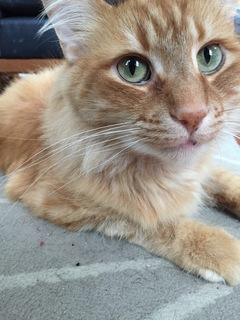 Raja The Cat