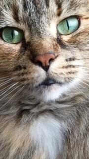 Best Cat Ever