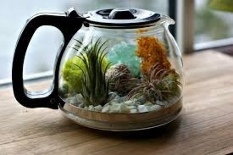 Upcycled Terrariums