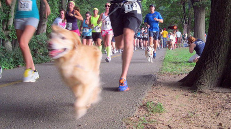 5k Race for the Animals