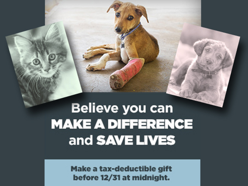 Year-End Gift to Save Lives 2017