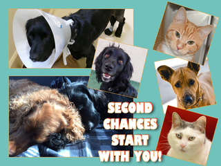 2017 Second Chance Campaign
