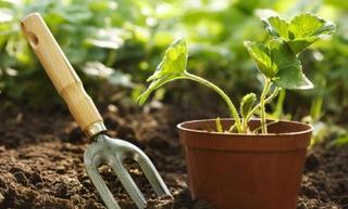 ReNEW Gardening/Recipes Class