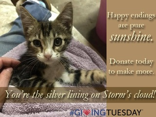 Valley Humane Society's #GivingTuesday 2017