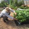 Foodlink Urban Farm Expansion