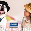 "Coldwell Banker's ""Homes for Dogs"""