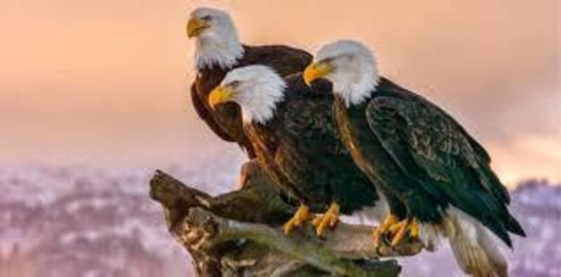 Unbreakable Eagles