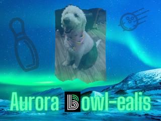 Aurora Bowl-ealis