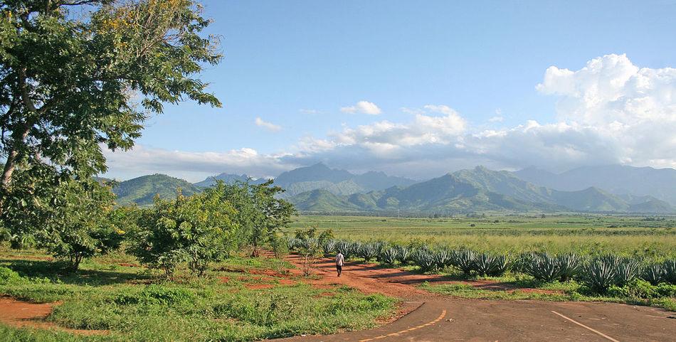 1200px mt uluguru and sisal plantations banner