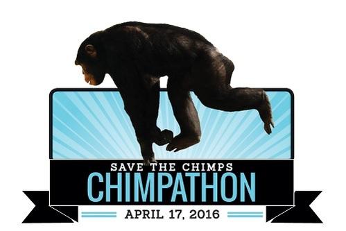 Don't miss Chimpathon 2016!