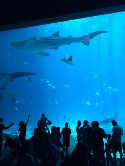Georgia aquarium img 2437