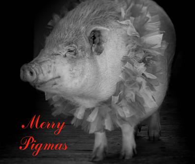 Merry pigmas