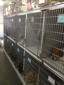 Rascal cages with dogs