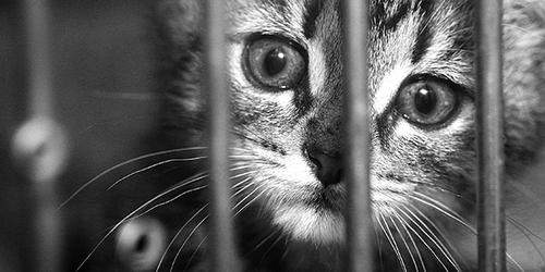 Cruelty & Cats