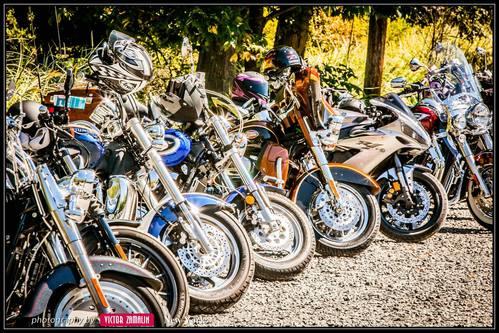 Victor bikes