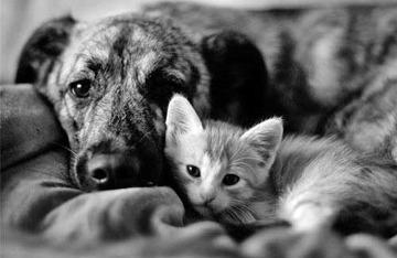 catdogbw.jpg