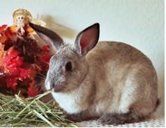 Bunny_-_Diana_Fleig.jpg