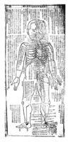 Chinese body