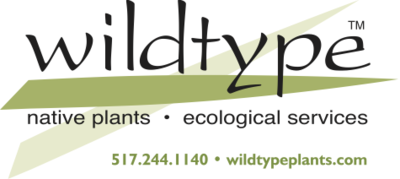 Wildtype plants