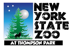Nyszoologo side transparent
