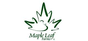 Maple leaf dark