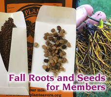 Fall roots and seeds