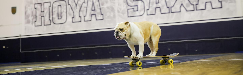 Jack the Bulldog on a skateboard in McDonough Arena