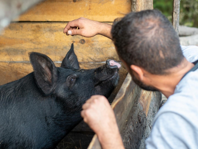 Man petting black pig