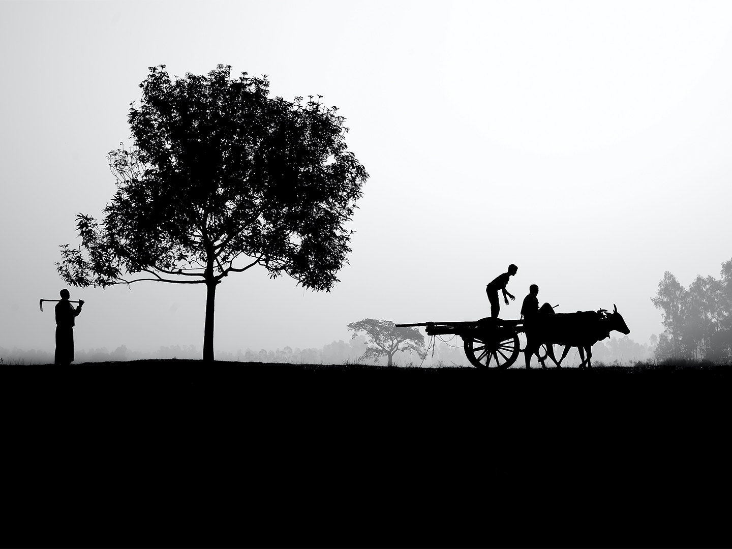Ox cart in a field