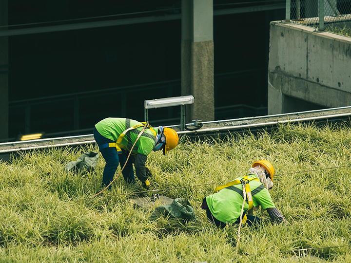 Construction workers in protective gear tend rooftop greenery,