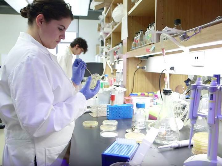 A student fellow conducting lab research.