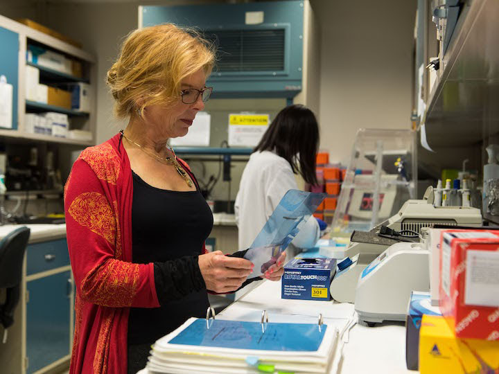 Professor Kathryn Sandberg working on a project in her lab.