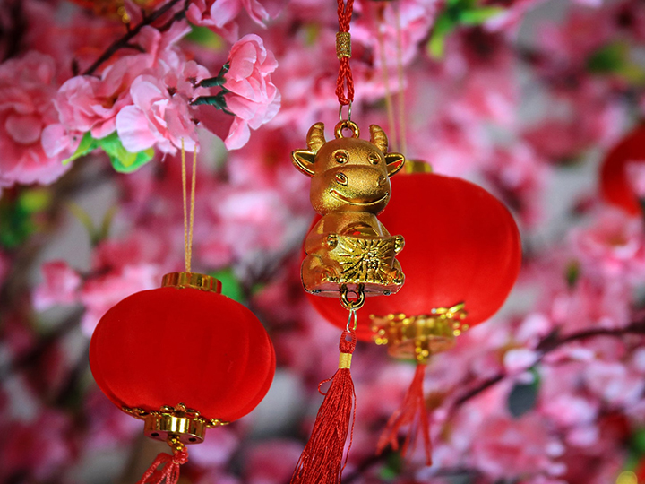 Ox ornament hanging on cherry blossom branch