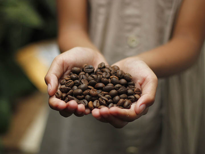 Latin American child holding coffee beans in hand
