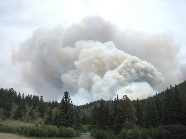 Cloud of smoke emerging from the ground behind a tree line, obscuring the sky.