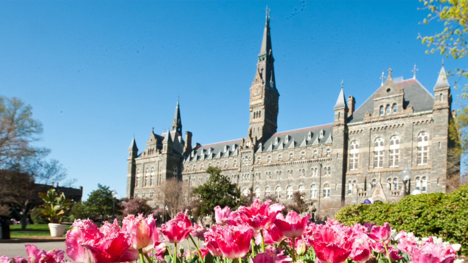 Flowers and Healy Hall