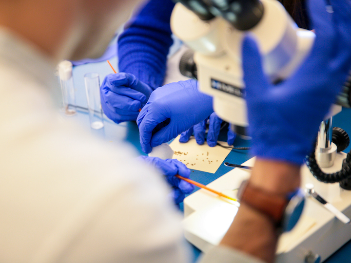 Students Working with Lab Gloves